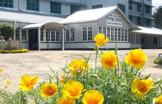 Чайная фабрика Park Green