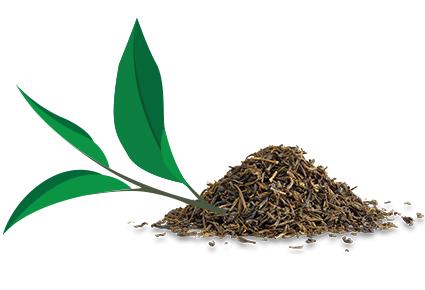 Что делает чай здоровым напитком?