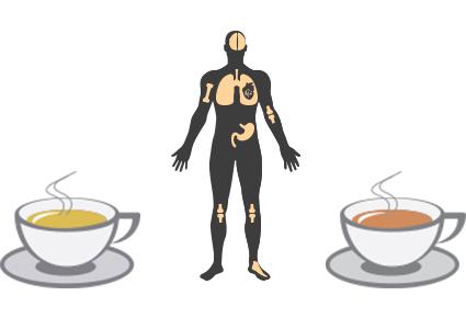 Свежезаваренный чай менее полезен, чем не свежезаваренный?